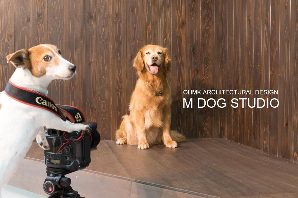 M DOG STUDIO / 2017